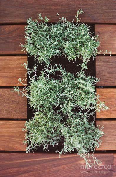 terraza-centro-moreco-paula-rosales-06-